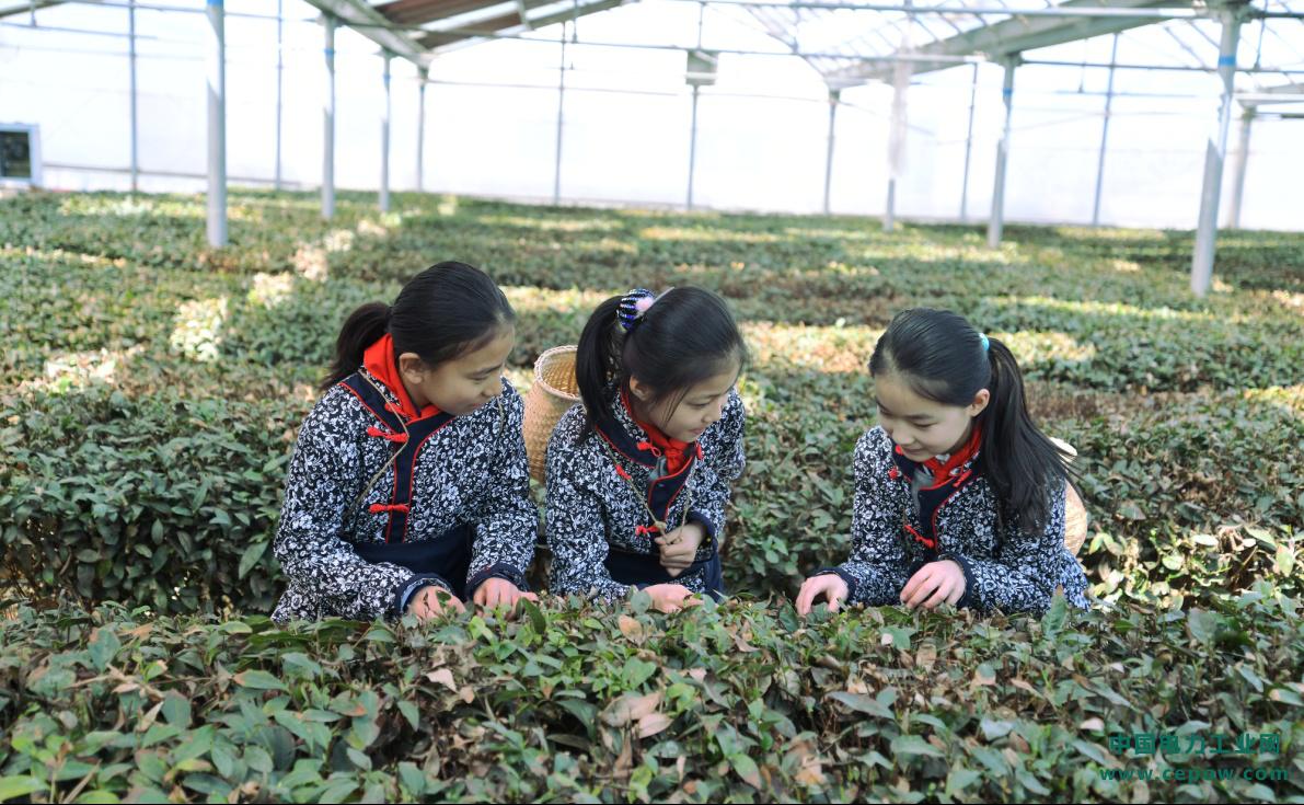聚焦中国农业70年 昌盛日电光伏+农业创新模式为农业发展培植厚土
